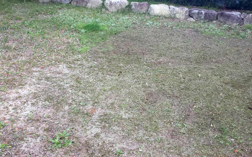 畑の位置を決めて、先ずは雑草処理。